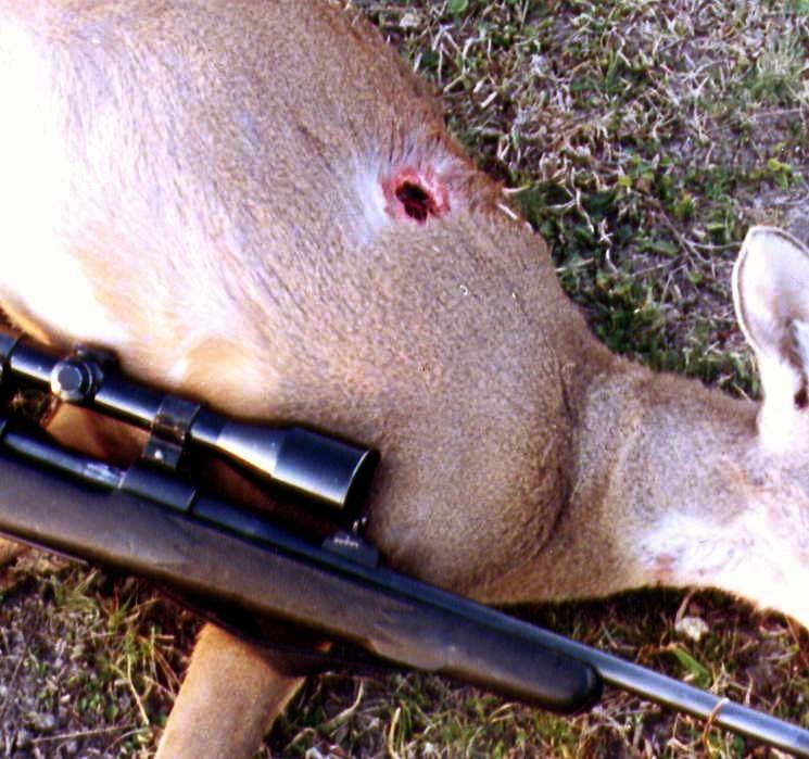 municion adecuada caza venado: